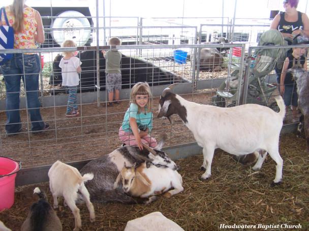 Fair Petting Zoo