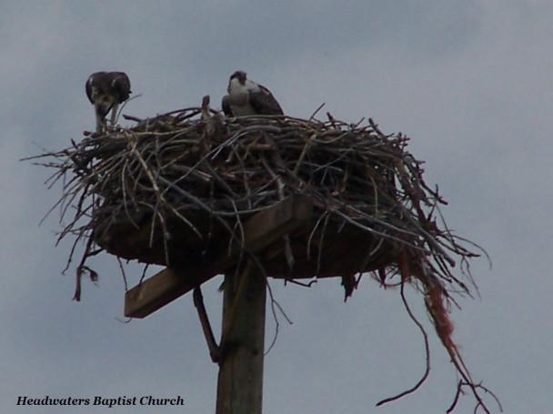 Eagles On High, Montana
